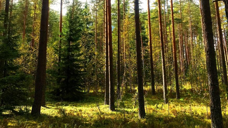 Árboles en el bosque