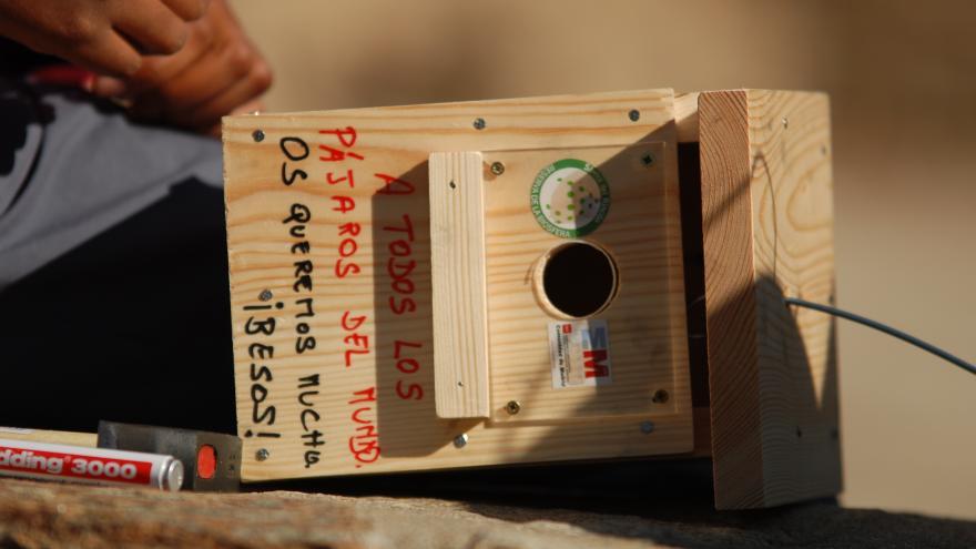 Revisando caja nido