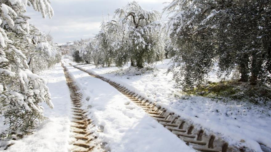 Campo rodada tractor olivos nieve
