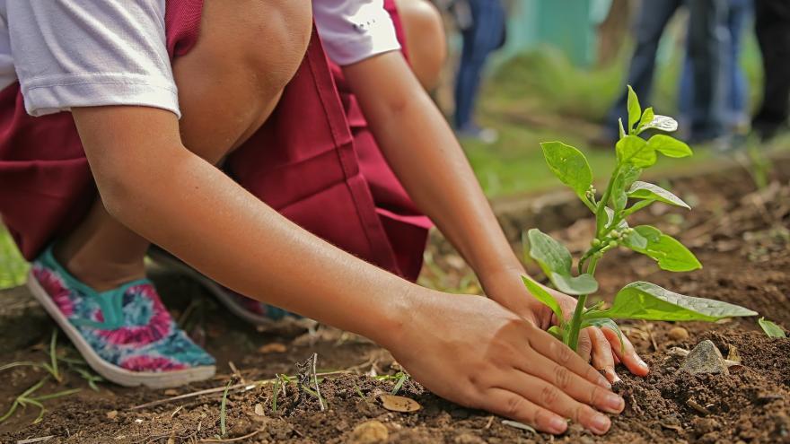 Niña plantando