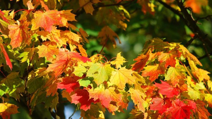 detalle de hoja en otoño