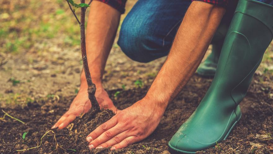 Joven plantando un árbol