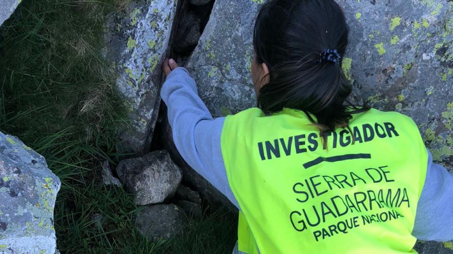 La Comunidad protege al sapo partero, la especie más amenazada del Parque Nacional