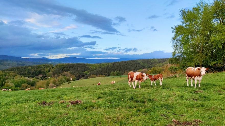 Prado vacas