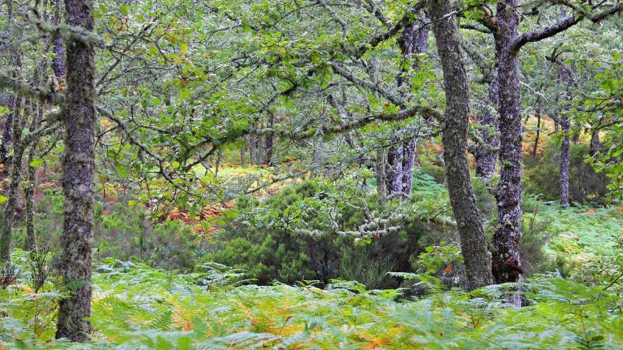 Bosque robledal
