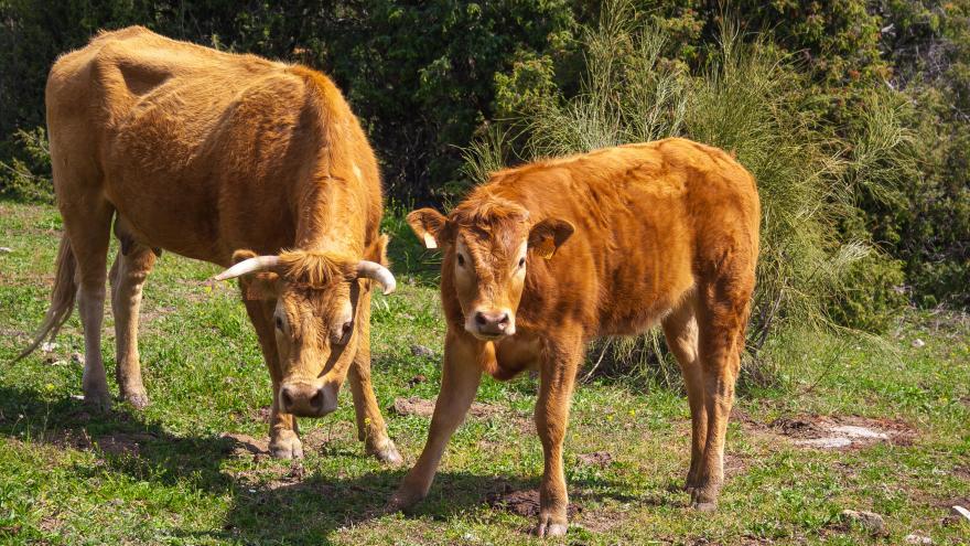 La Comunidad incrementa las ayudas a la Carne de la Sierra de Guadarrama en un 120 %