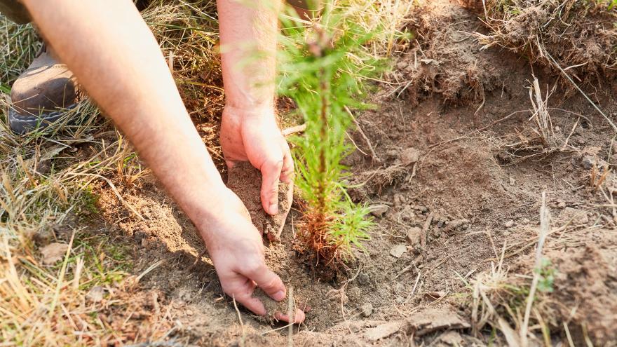 Una persona plantando un arbol