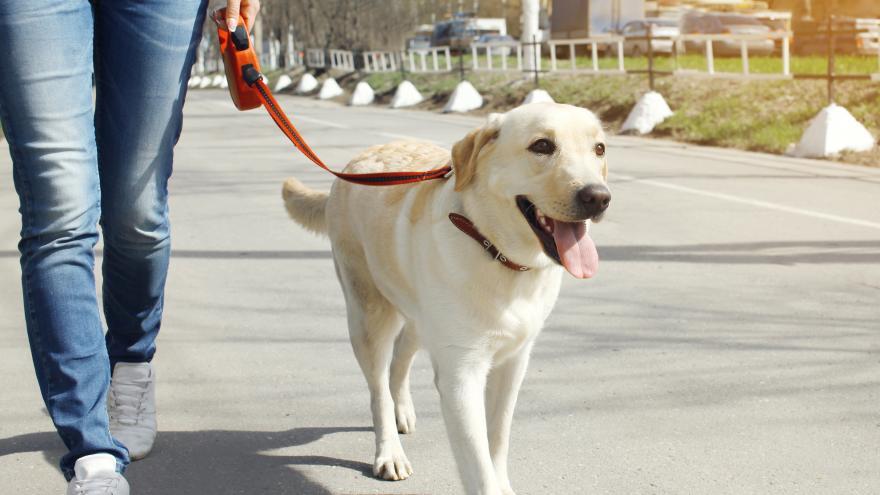 Un joven paseando a su perro