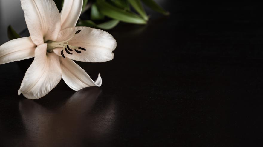 Unas flores blancas