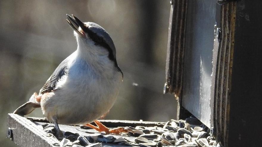 Comedero ave