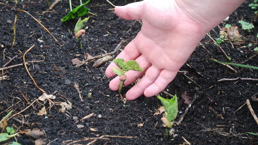 Planta naciendo abono