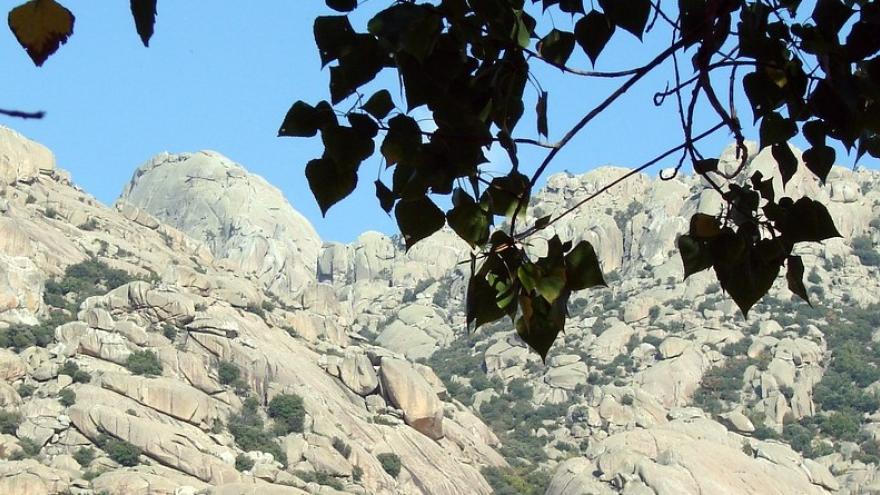 La Pedriza hojas árbol