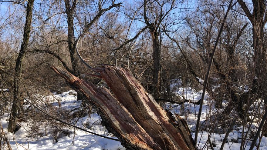 Valoramos los daños de la borrasca Filomena en los montes de la región en casi cuatro millones de euros