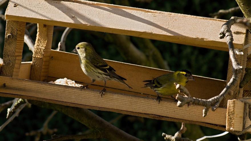 Dos pájaros en comedero