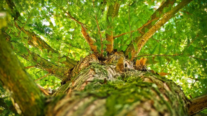 Imagen de copa de árbol vista desde abajo