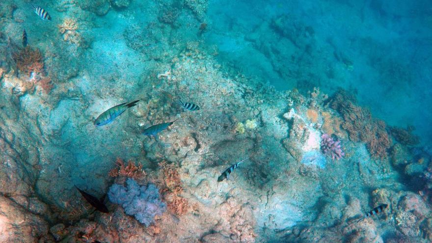 Rocas peces océano