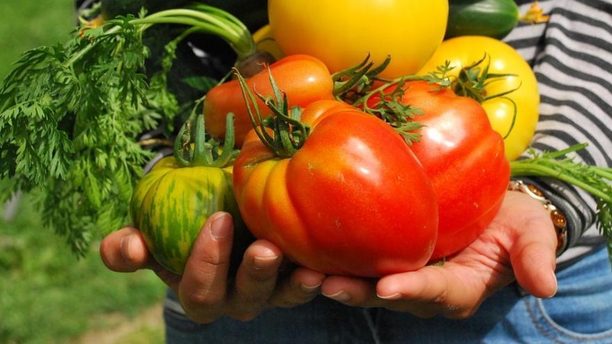 Tomates vegetales manos
