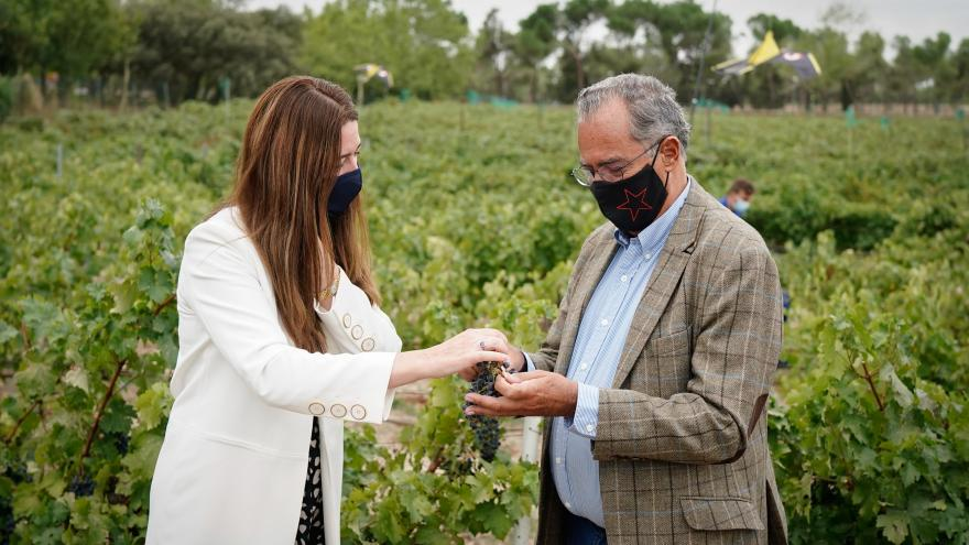 El consejero recibiendo un racimo de uvas en un campo de cosecha