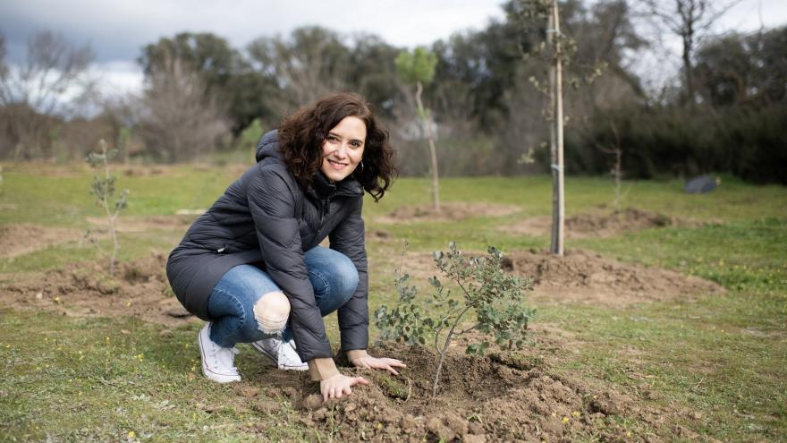 Isabel Díaz Ayuso en la plantación de 350 árboles en Boadilla del Monte