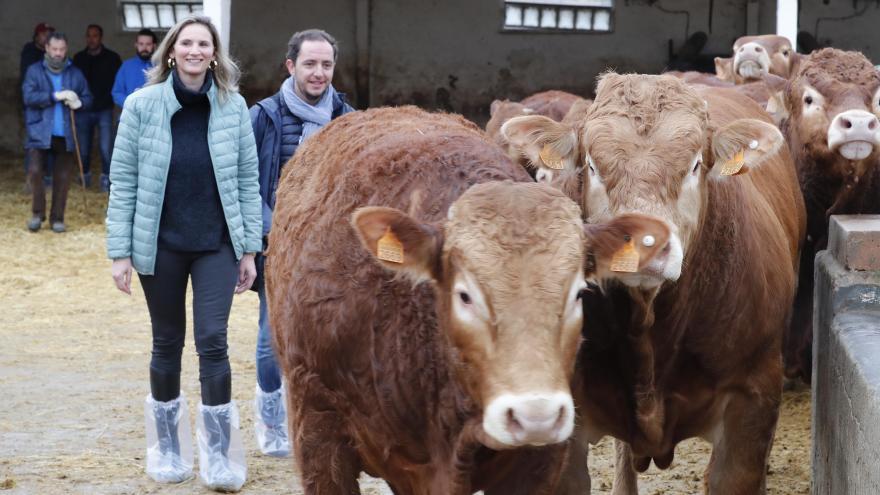 Paloma Martín en la subasta de ganado de raza limusín