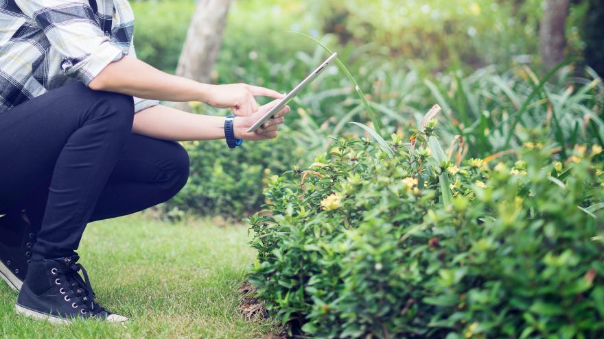 Mujer con una tablet examinando un arbusto
