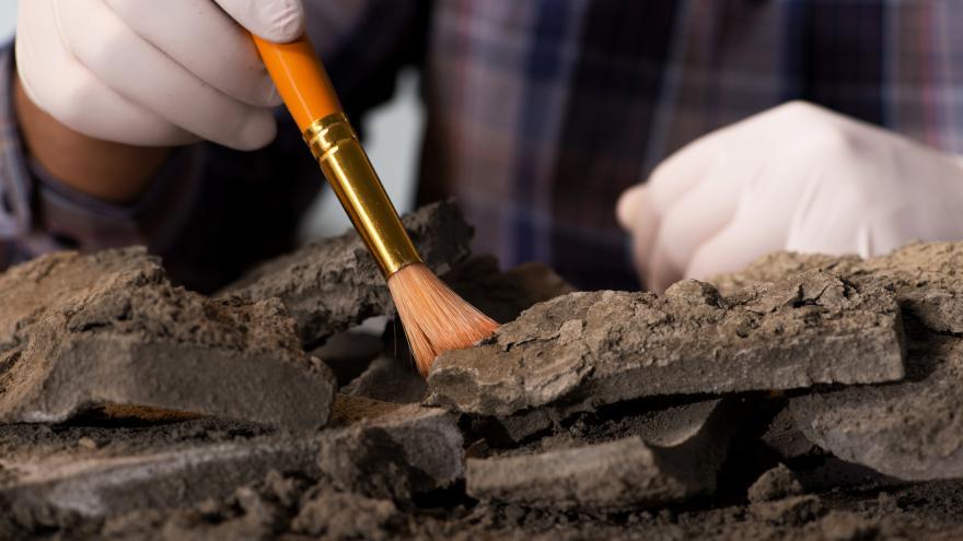 arqueólogo  trabajando