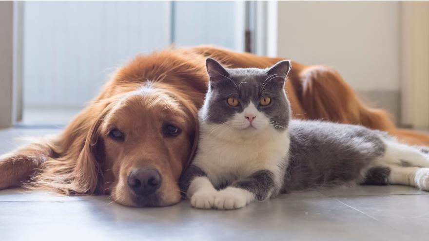 mascotas imagen 1