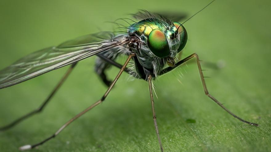 Imagen macro de una mosca