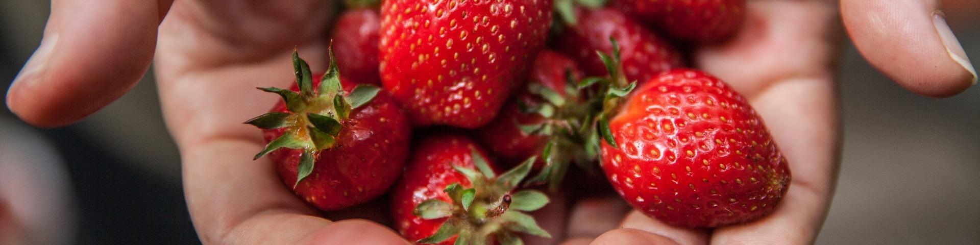 Manos sosteniendo fresas