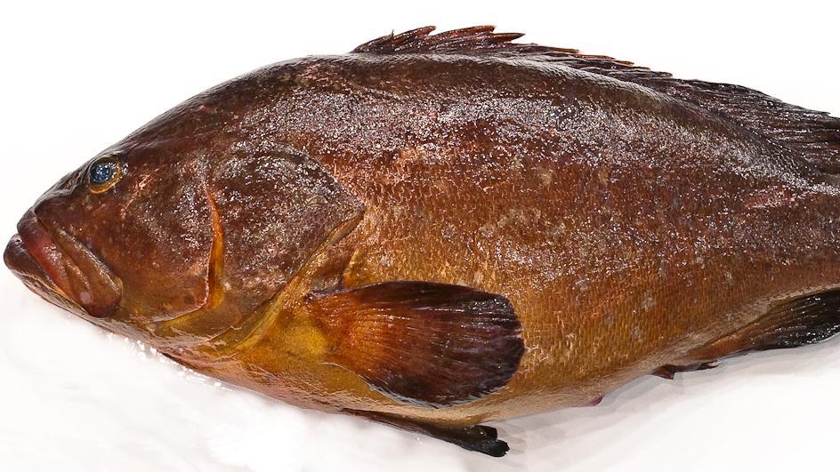Pescado crudo: Mero