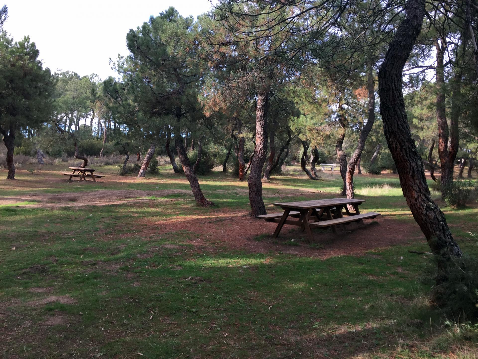 Parque Regional de la cuenca alta del Manzanares. Área recreativa El Berzalejo