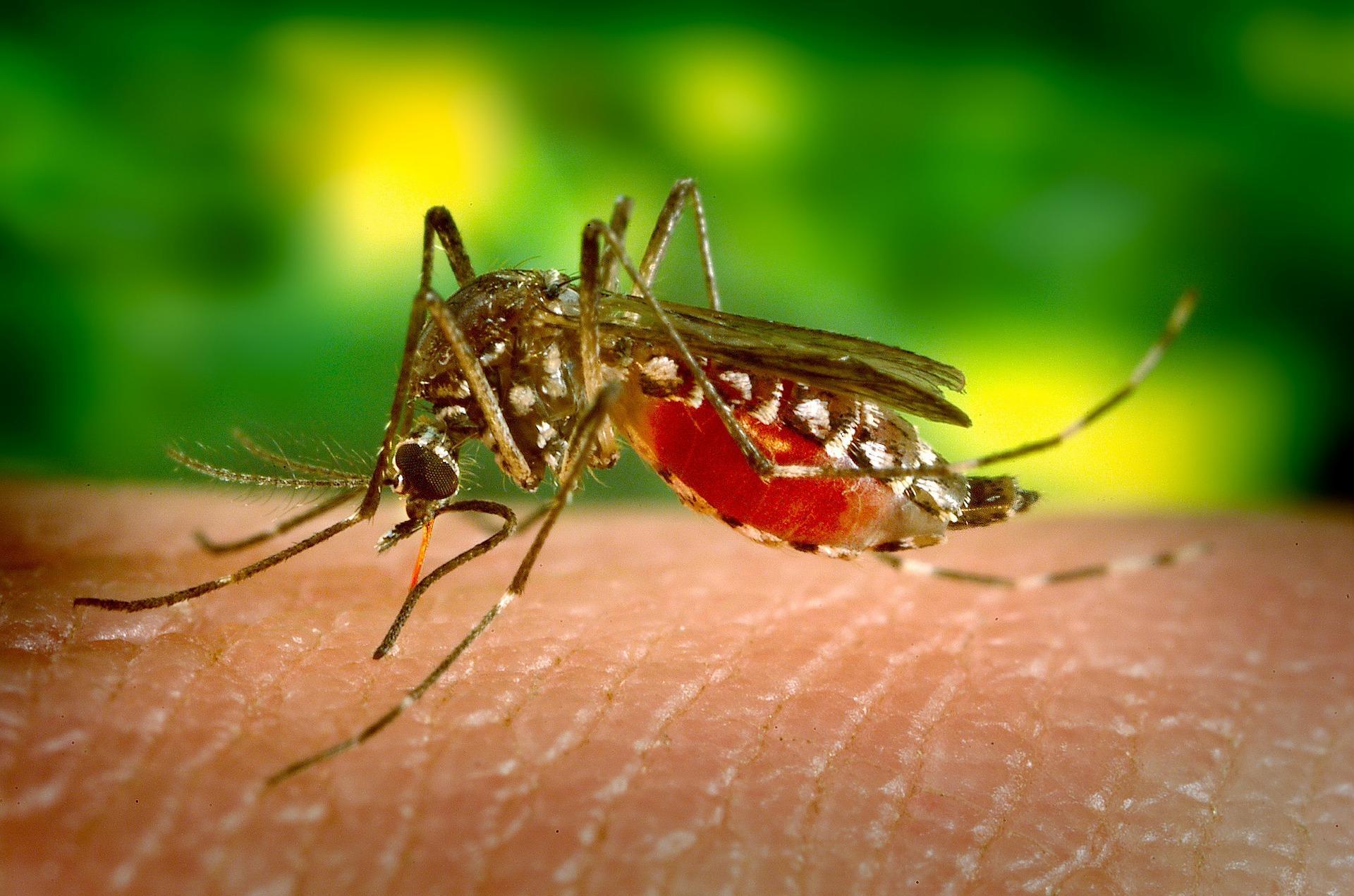 Mosquito sobre un fondo de hojas de color verde