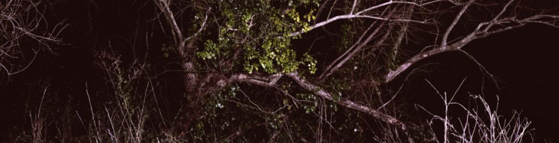 Fotografía de un bosque nocturno