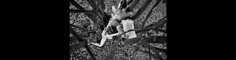 imagen de varios bailarines del espectáculo Joy enredados en las ramas de un árbol