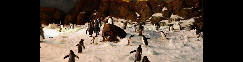 Pingüinos en Faunia