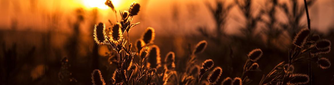 Imagen de unas plantas a contraluz en verano