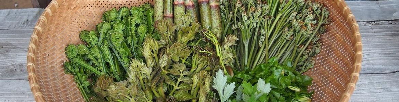 Plantas silvestres comestibles