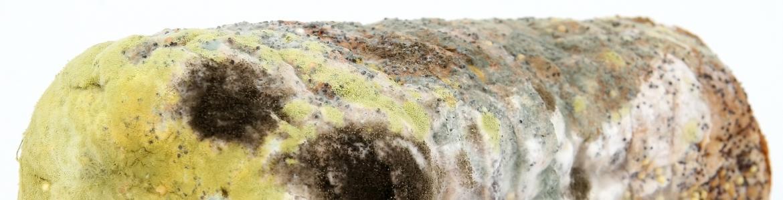 Pan contaminado con moho