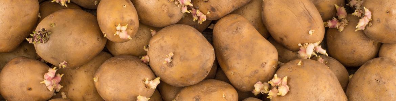 Patatas con brotes a granel