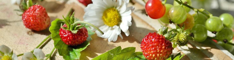 Fresas silvestres y otras bayas y flores del campo