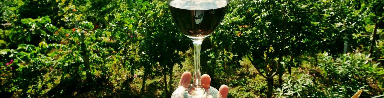 Mano que sostiene una copa de vino tinto y viñedo al fondo
