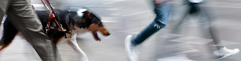 Imagen ilustrativa de transeúntes y perro guía