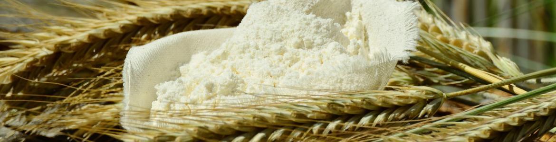 Harina y trigo