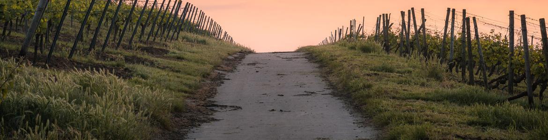 Imagen de un camino rural