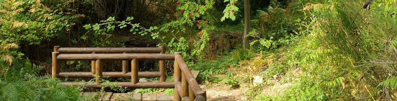 Camino por el Arboreto