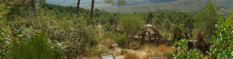 Vista desde el mirador del Arboreto Luis Ceballos