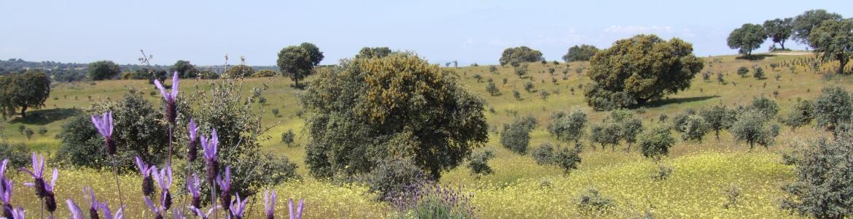 Parque Regional del curso medio del río Guadarrama y su entorno