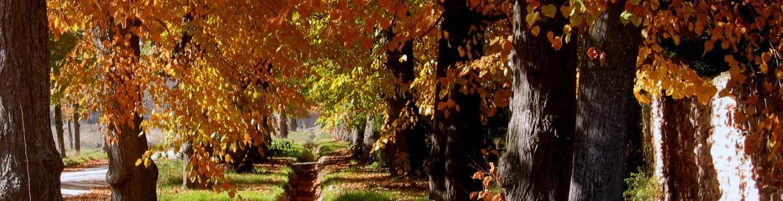 copas de árboles en otoño