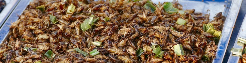 Bandeja de insectos para comer