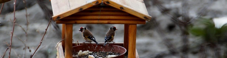 Casita comedero aves
